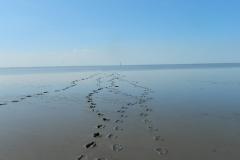 Wattenmeer-SB